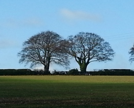 The Beech Tree (left)